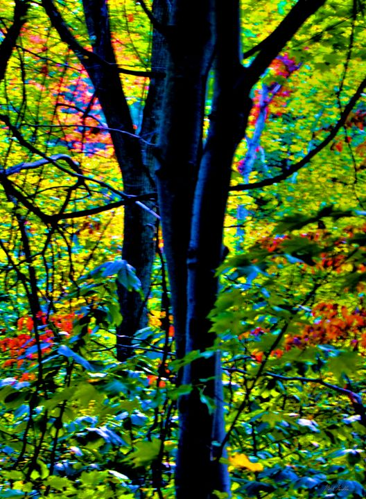 Colored Tree leaves - Mark Goodhew Photography