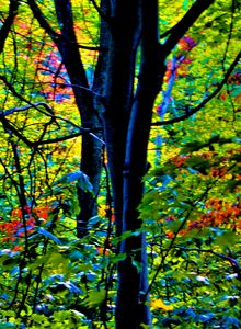 Colored Tree leaves