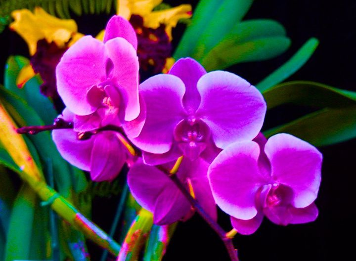 Orchid - Mark Goodhew Photography