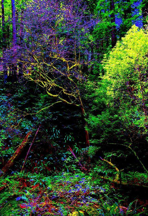 Muir Woods 2 - Mark Goodhew Photography