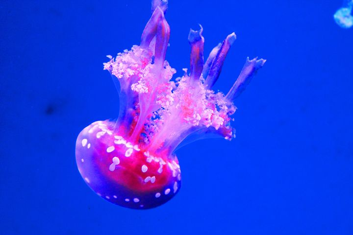 Jellyfish - Stevie Little