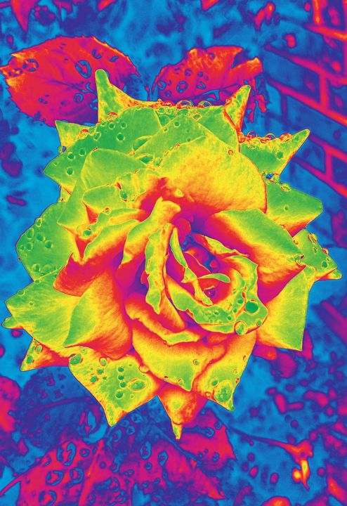 Infrared Rose - Ethereal Art
