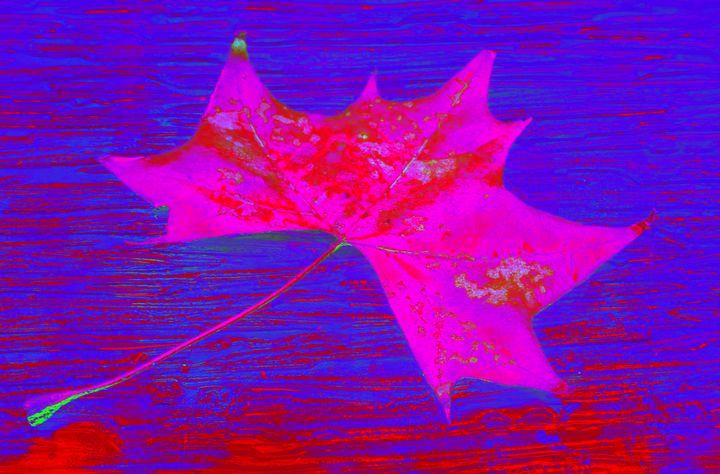 Autumn Leaf in Violet - Ethereal Art