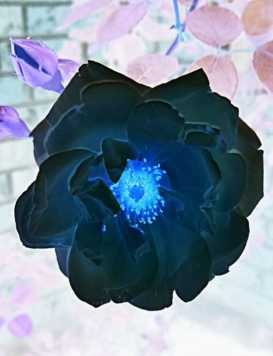 Dark Rose - Ethereal Art