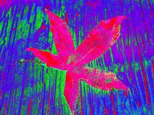 Autumn Leaf Deux