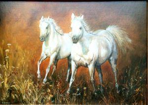 Z.Bereszka. White wild horses