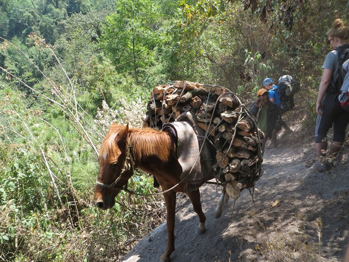A donkey carrying fire wood - Normads Art Studio