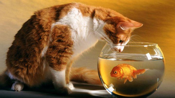 Cat and Ornamental Fish - Normads Art Studio