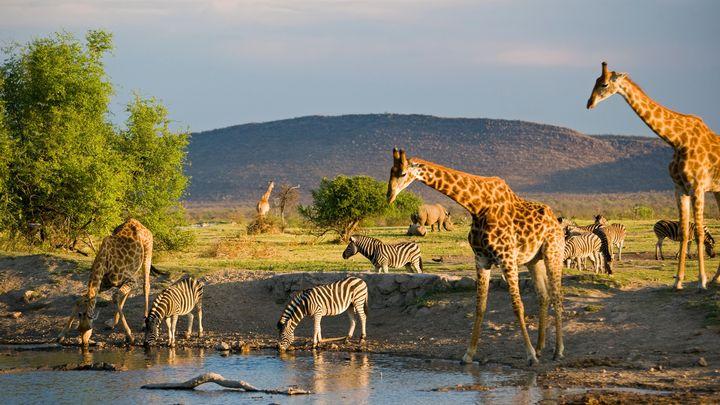african wildlife - Normads Art Studio