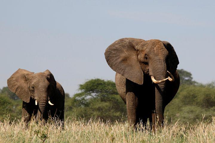 A Couple of Elephants - Normads Art Studio