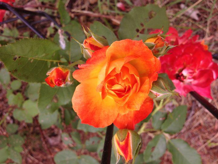 Fire Rose - Kesha LaRoche