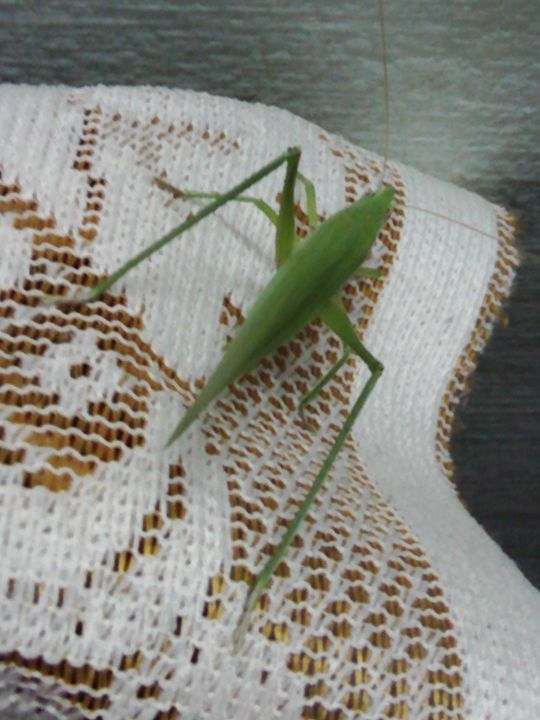 GRASSHOPPER - Lallu's paintings & photography