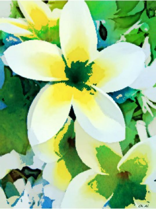 Cornus Flower - Fleurdelis