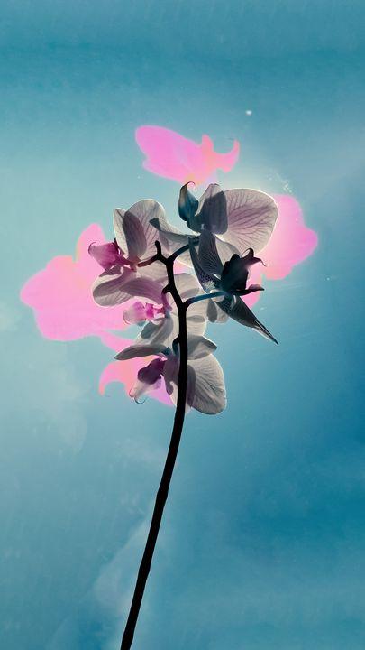 The Sun Behind a Flower (abstracted) - Bildende Kuenste