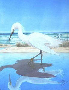 Snowy Egret 1985