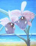 Hawaii Orchid 1985