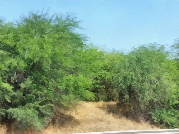 "Shrubs in the ""Negev"" - nova"