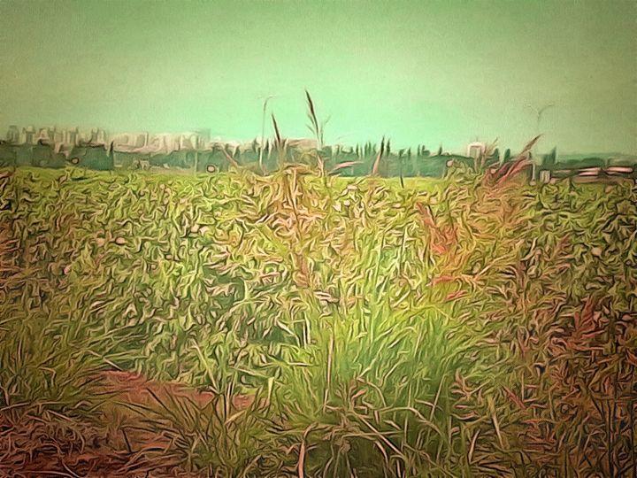 Wheat Field - nova