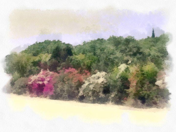 Hill plant - nova