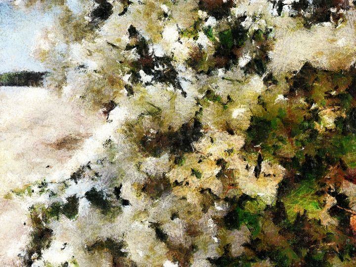 White flowers - nova