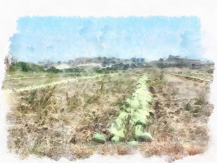 Watermelon field 4 - nova