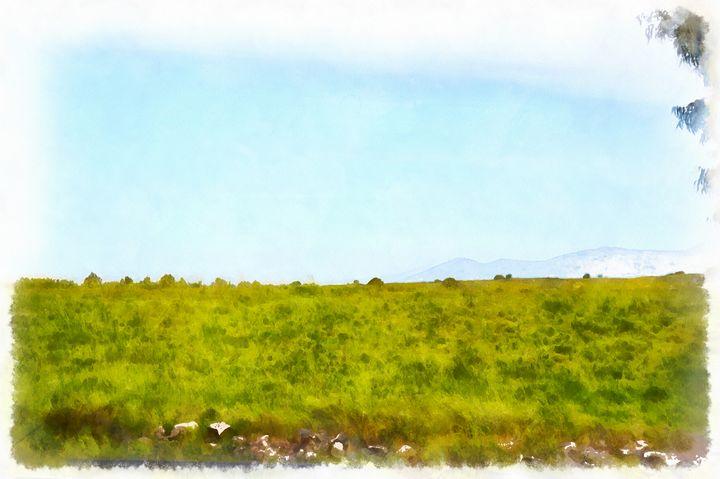 The meadow - nova