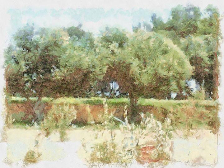 A small grove - nova