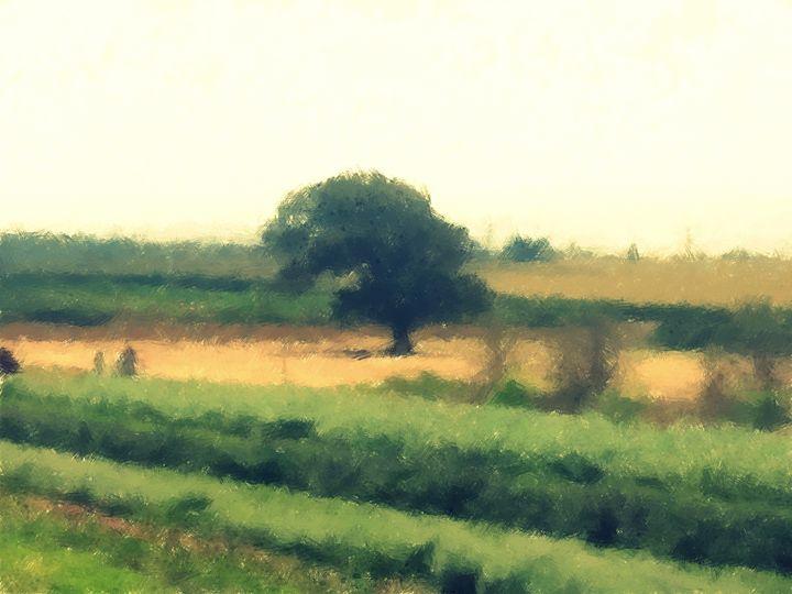 Lone Tree - nova