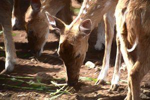 Reindeer Forest 2