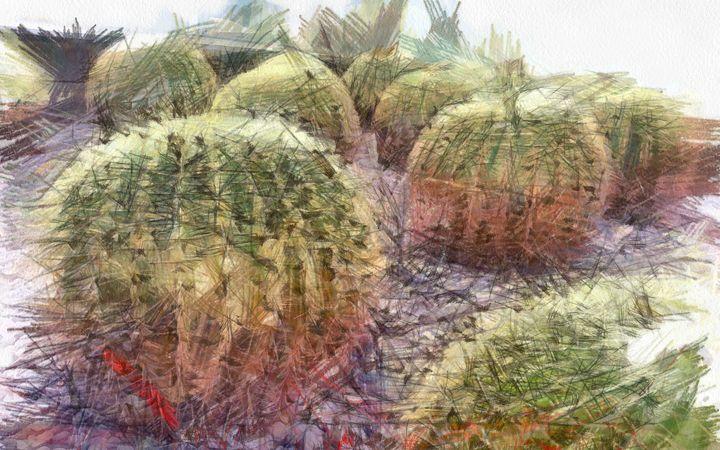 Cactus field - nova