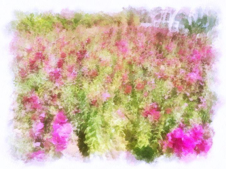 Flower Field - nova