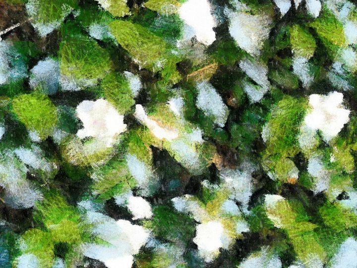 Green and white checkers - nova