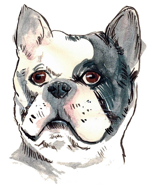 Yet Another French Bulldog - Harlen Chen