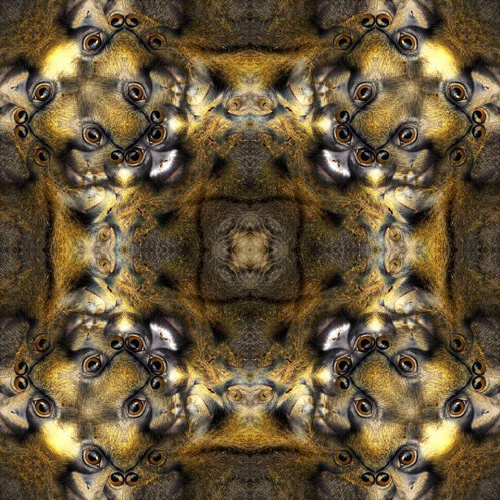 Quantum Monkey Soul Matrix - Gateways Of Hyperspace