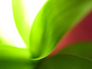 Green composition 4