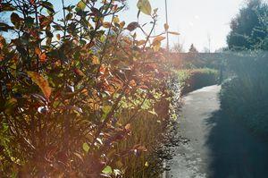 Autumn leaves on film