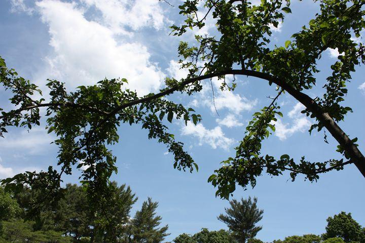 Arthur Arboretum - Beautiful Day - Emily Sobiecki