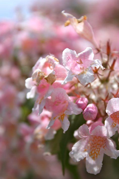 Arthur Arboretum - Flowers - Emily Sobiecki