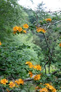 Arthur Arboretum - Flowers