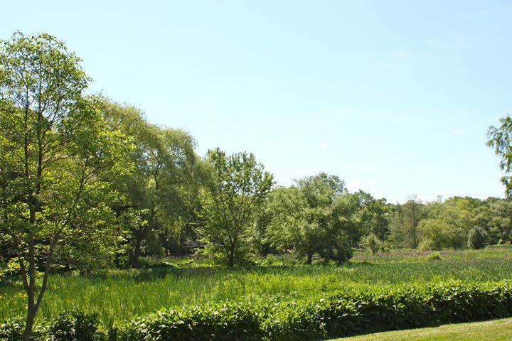 Arthur Arboretum - Meadow Road - Emily Sobiecki