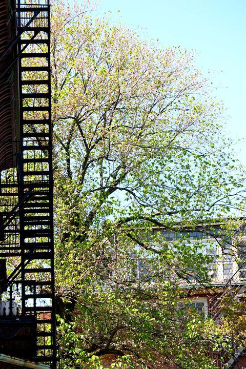 Beacon Hill Fire Escape in Spring - Emily Sobiecki