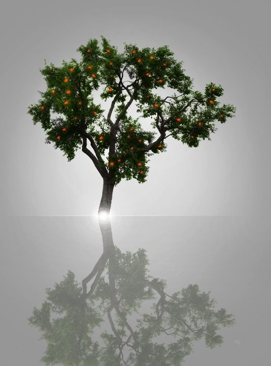 Wishing Tree - P.Halliwell