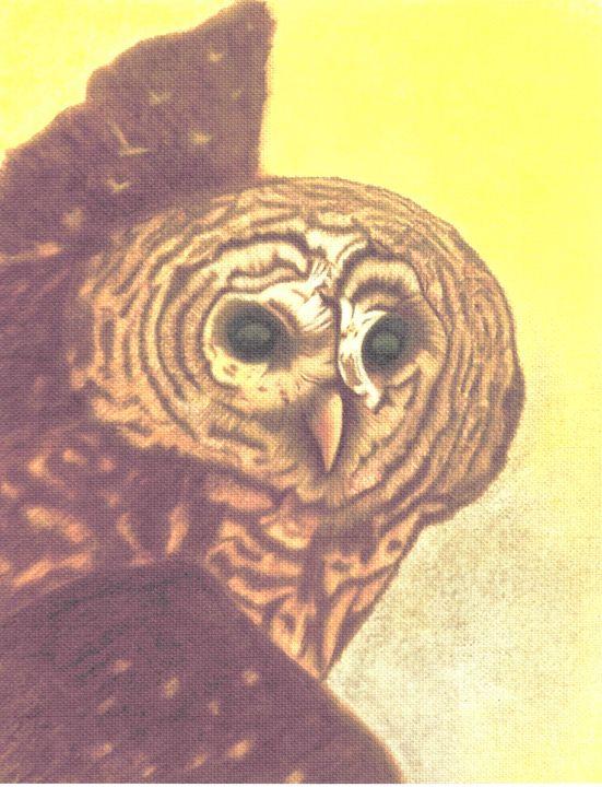 My Owl - Dianne Tumey's Artworks
