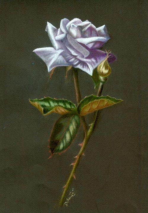 Lavender Rose - Dianne Tumey's Artworks