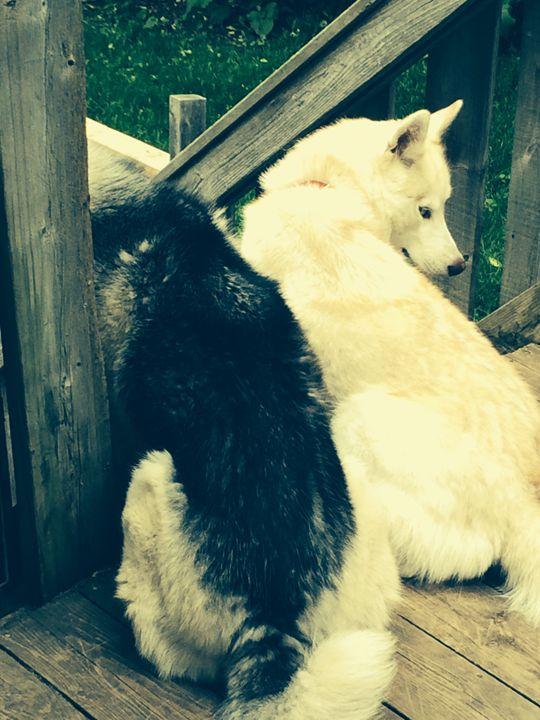 Shiloh&Sookie - Nicole