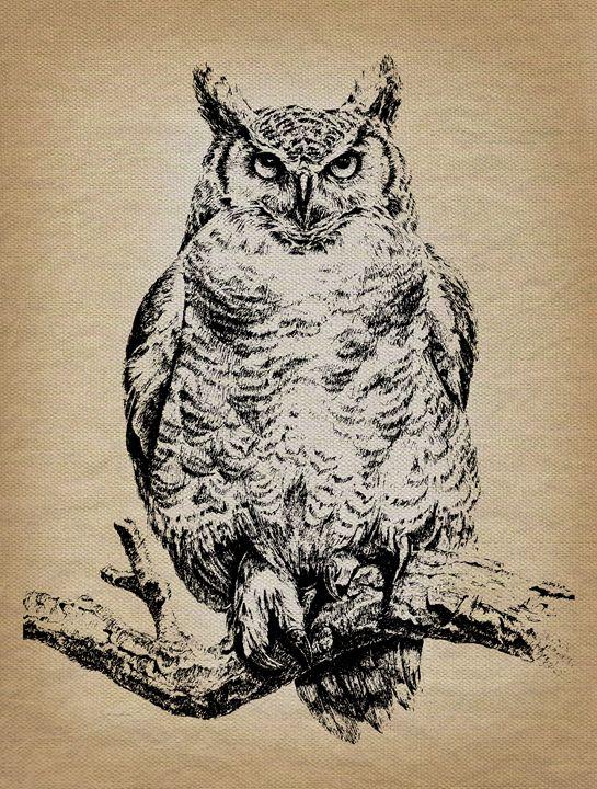 Owl - RJMN Illustrations