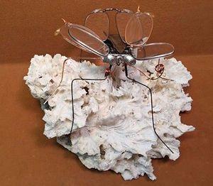 Curtis Fly - Miga design