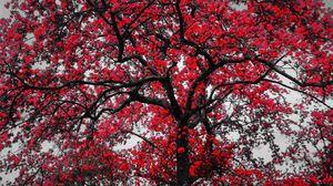 Red Black Tree