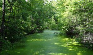 Green Algae Creek
