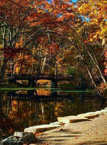Bridge thru the Woods
